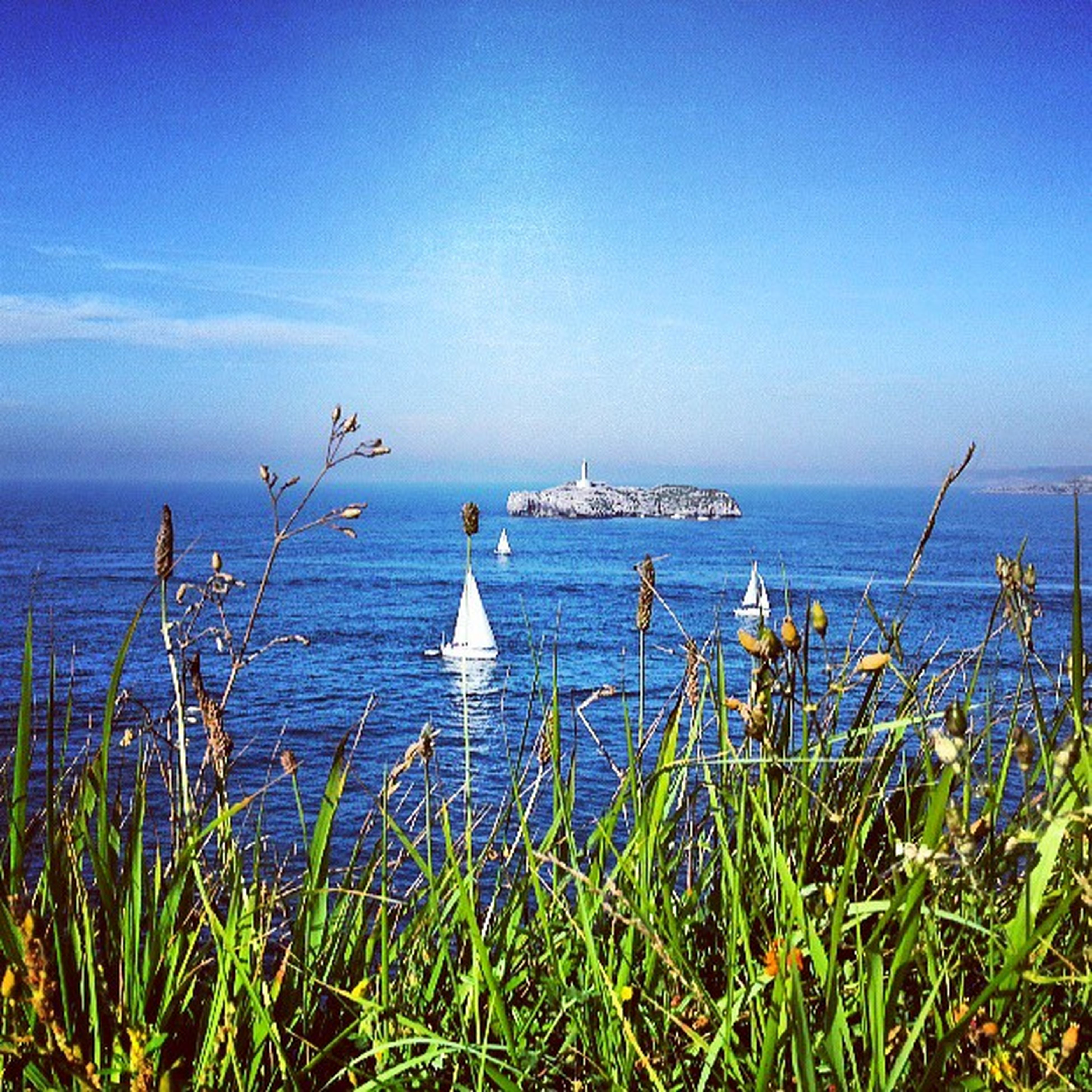 water, sea, blue, horizon over water, tranquil scene, tranquility, grass, beauty in nature, plant, scenics, nature, sky, growth, clear sky, idyllic, day, copy space, outdoors, no people, non-urban scene