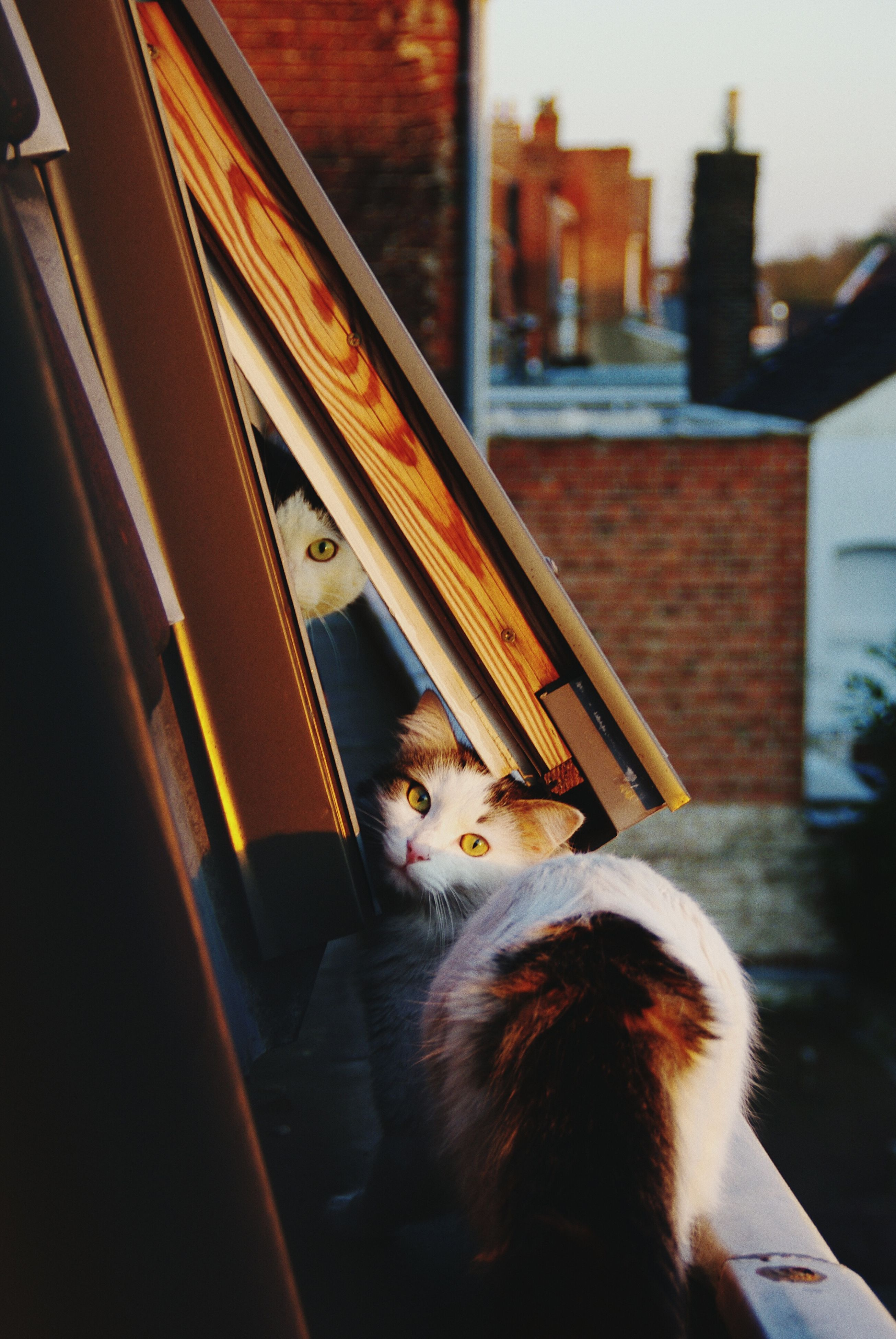 pets, animal themes, one animal, domestic animals, mammal, domestic cat, cat, indoors, feline, window, dog, sitting, whisker, architecture, built structure, home interior, relaxation, looking away, house, focus on foreground
