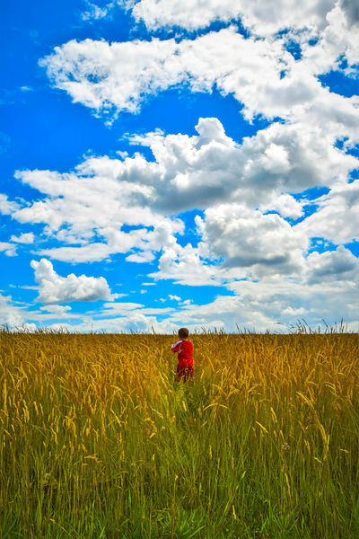Beauty In Nature Blue Sky Boy Running Casual Clothing Cloud - Sky Corn Field Crop  Day Field Green Color Growth Horizon Over Land Landscape Leisure Activity Lifestyles Nature Outdoors Plant Rural Scene Scenics Sky Tranquil Scene Tranquility