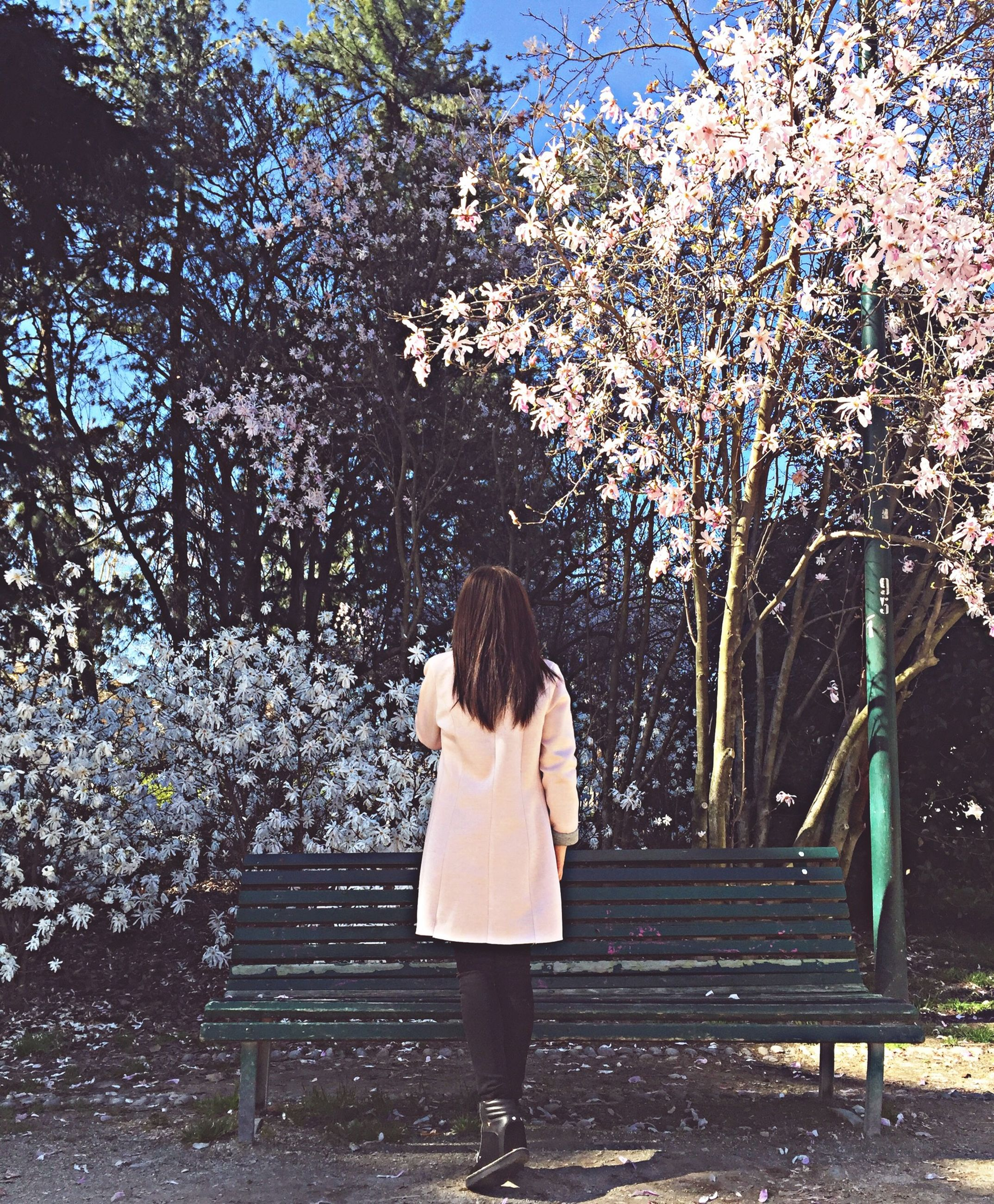 tree, rear view, lifestyles, full length, leisure activity, person, standing, casual clothing, flower, walking, park - man made space, nature, growth, outdoors, men, day, branch, holding