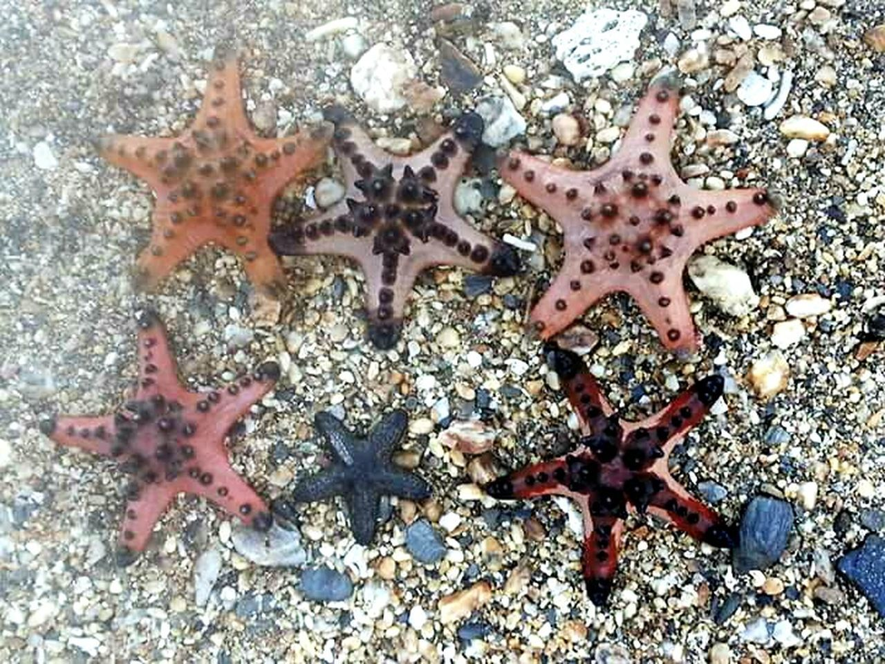 Starfish At Beach Star Shape