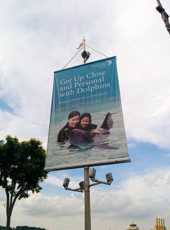 Boycott Dolphins Thecove