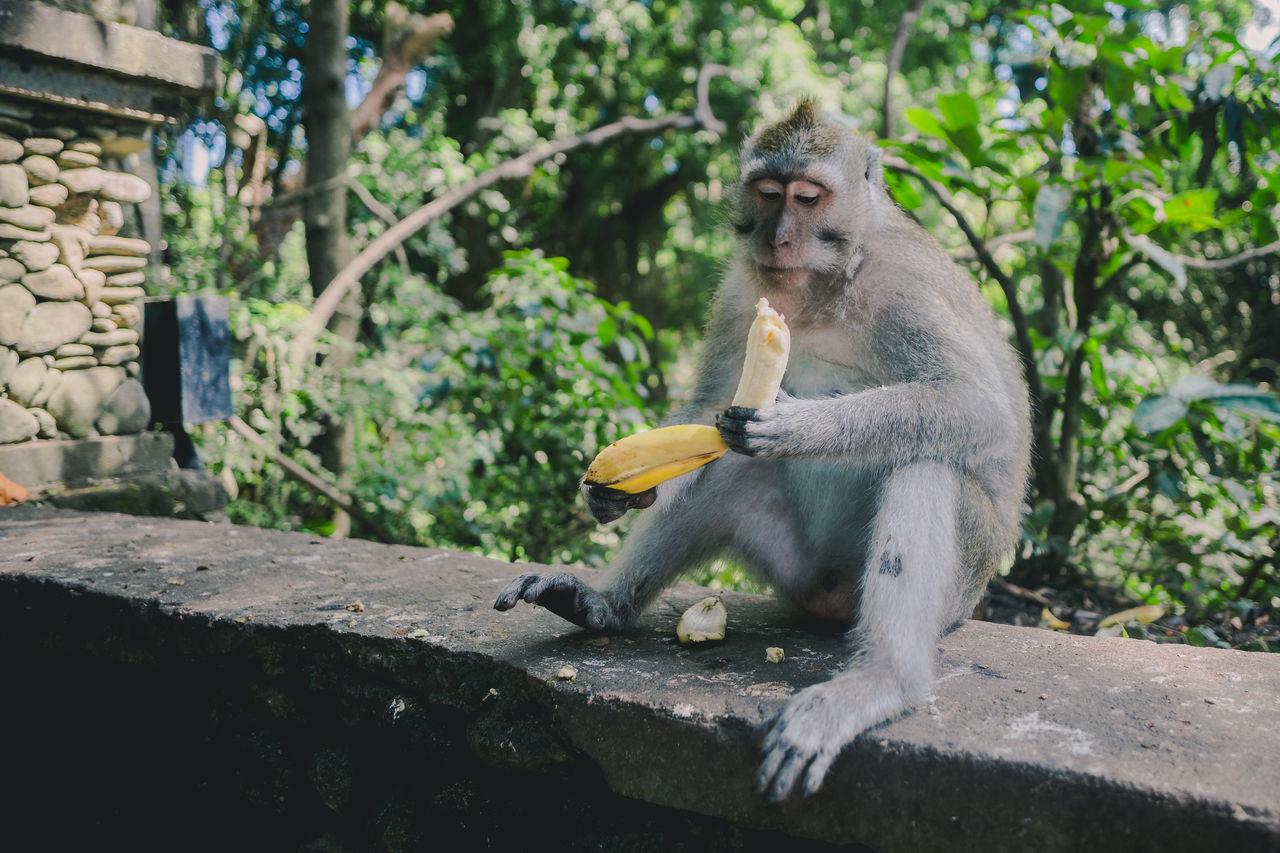 Beautiful stock photos of animals,  Animal Behavior,  Animal Themes,  Animal Wildlife,  Animals In The Wild