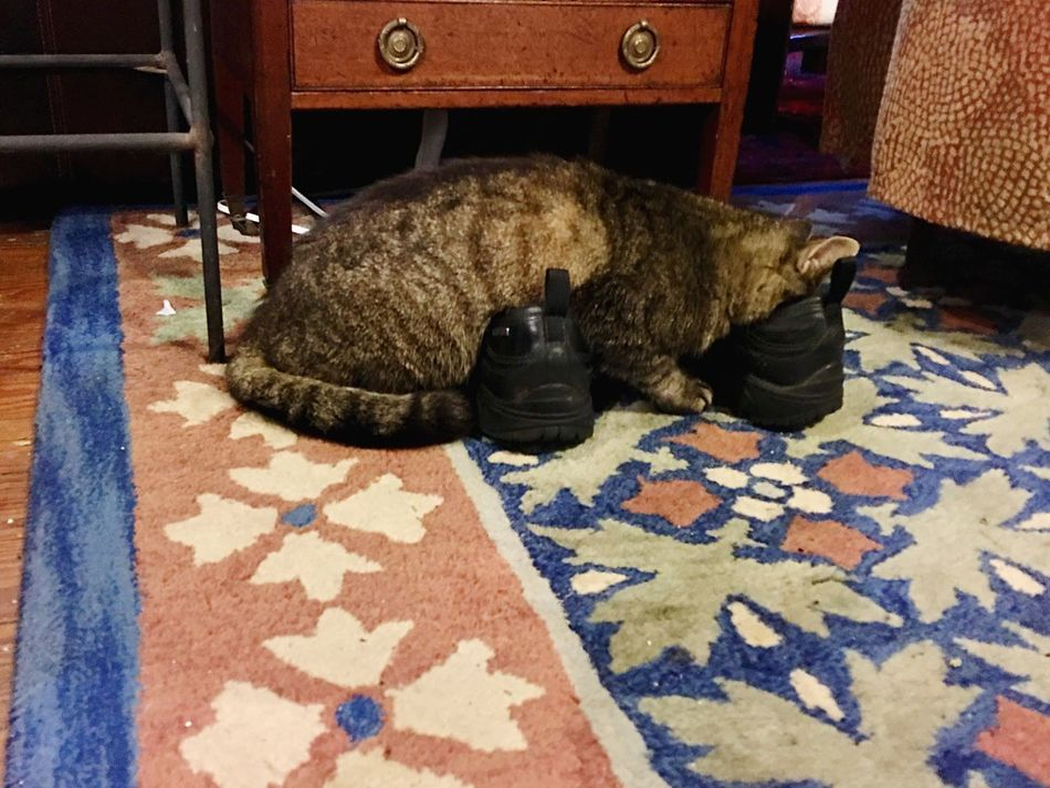 Cat face in shoe