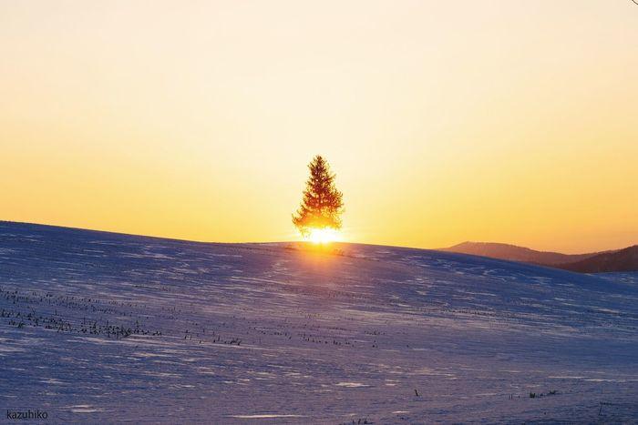 Hokkaido Japan Biei 夕陽の木