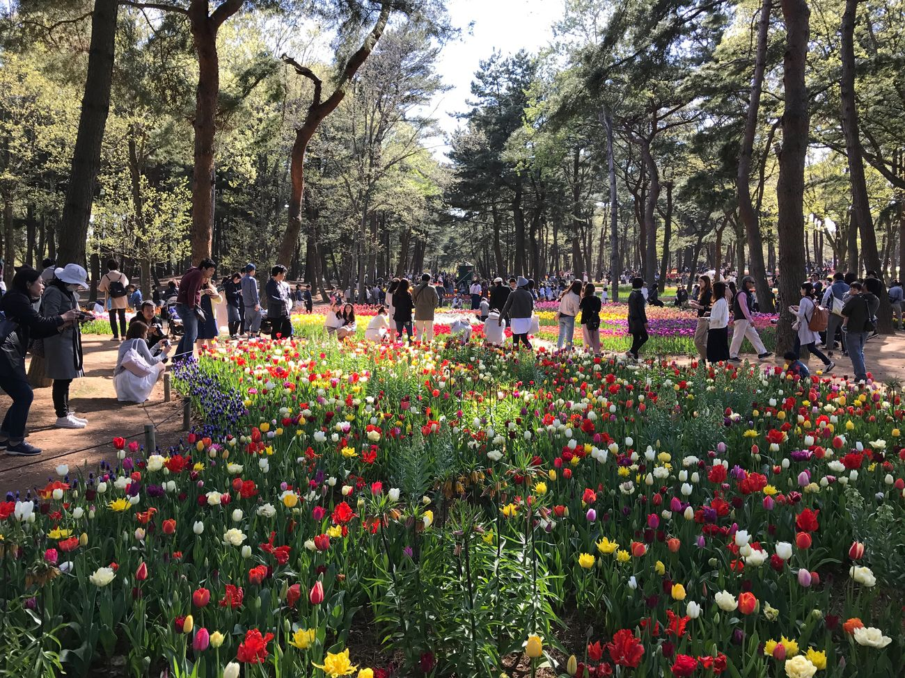 HitachiSeaSidePark Large Group Of People Tree Nature Flower Growth Beauty In Nature Outdoors Real People Tree Trunk Day Men Park - Man Made Space Plant Fragility Freshness Crowd People Adult