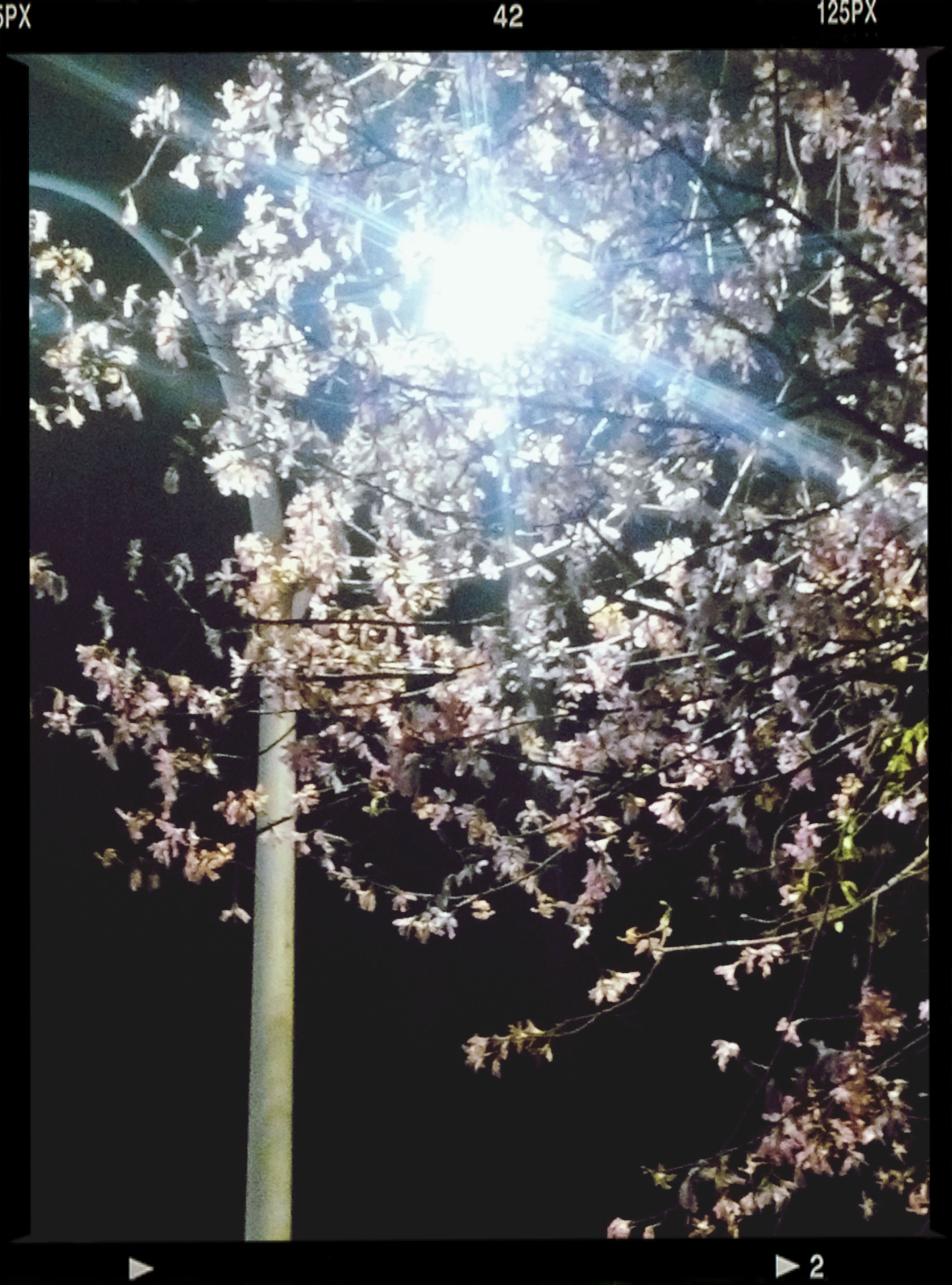 transfer print, tree, low angle view, auto post production filter, branch, growth, nature, sunlight, beauty in nature, sky, sunbeam, flower, sun, day, no people, outdoors, built structure, lens flare, building exterior, tranquility