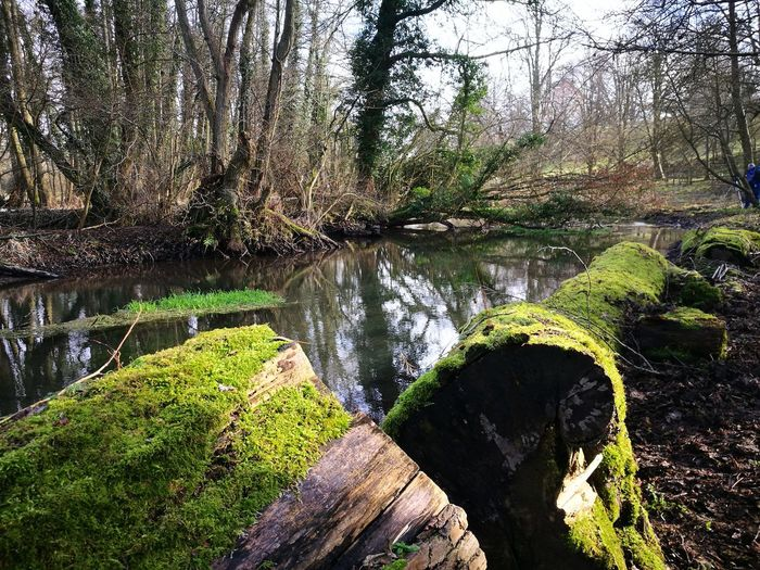 Growth Nature Tree Beauty In Nature Green Color Water Sunlight Outdoors Scenics Plant Lake No People Day Branch Grass Close-up