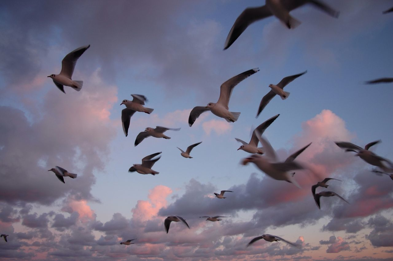 Beautiful stock photos of twilight, Animal In The Wild, Animal Themes, Bird, Blurred Motion