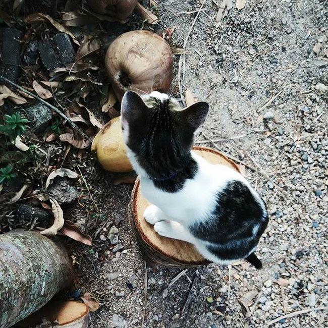 Good mopi 🌴🌳👀😺 Mopi Annamopi Annayangpunya Cats Kittens Ilovecat Annasiihah