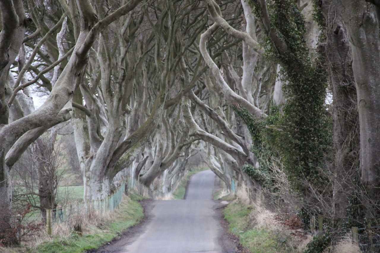 """""""Kings Road"""" Bare Tree Branch Brown Countryside Day Farytale Film Forest Green Kingsroad Landscape Movies Nature Nature Nature Photography No People Outdoors Road Road Scenery Scenics Single Lane Road The Way Forward Traveling Tree"""