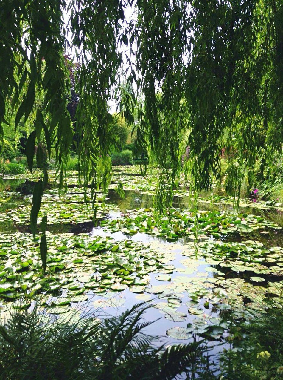 I giardini di Monet- the Monet gardens Monet Monet House France Giverny Les Jardins De Monet Trip Photo 2015  Trip Beautiful Art Nature Landscape Waterlilies Gardens Lake Water