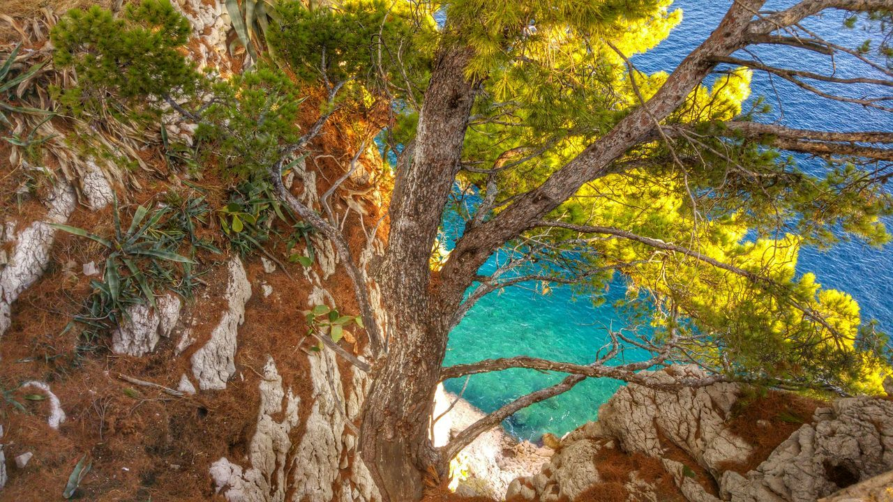 Lonely tree on the rocky island Coastline Landscape Coastal_collection Sea Seaview Island Island View  Coastview Cactus Wonderful Croatia Croatia Croatia_photography Makarskariviera Makarska Makarska Riviera Feel The Journey Summertime A Bird's Eye View
