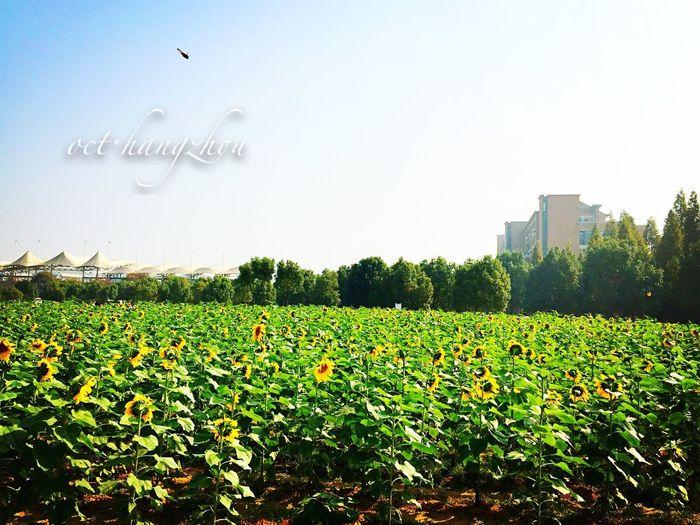 Autumn Colors oct in hangzhou First Eyeem Photo