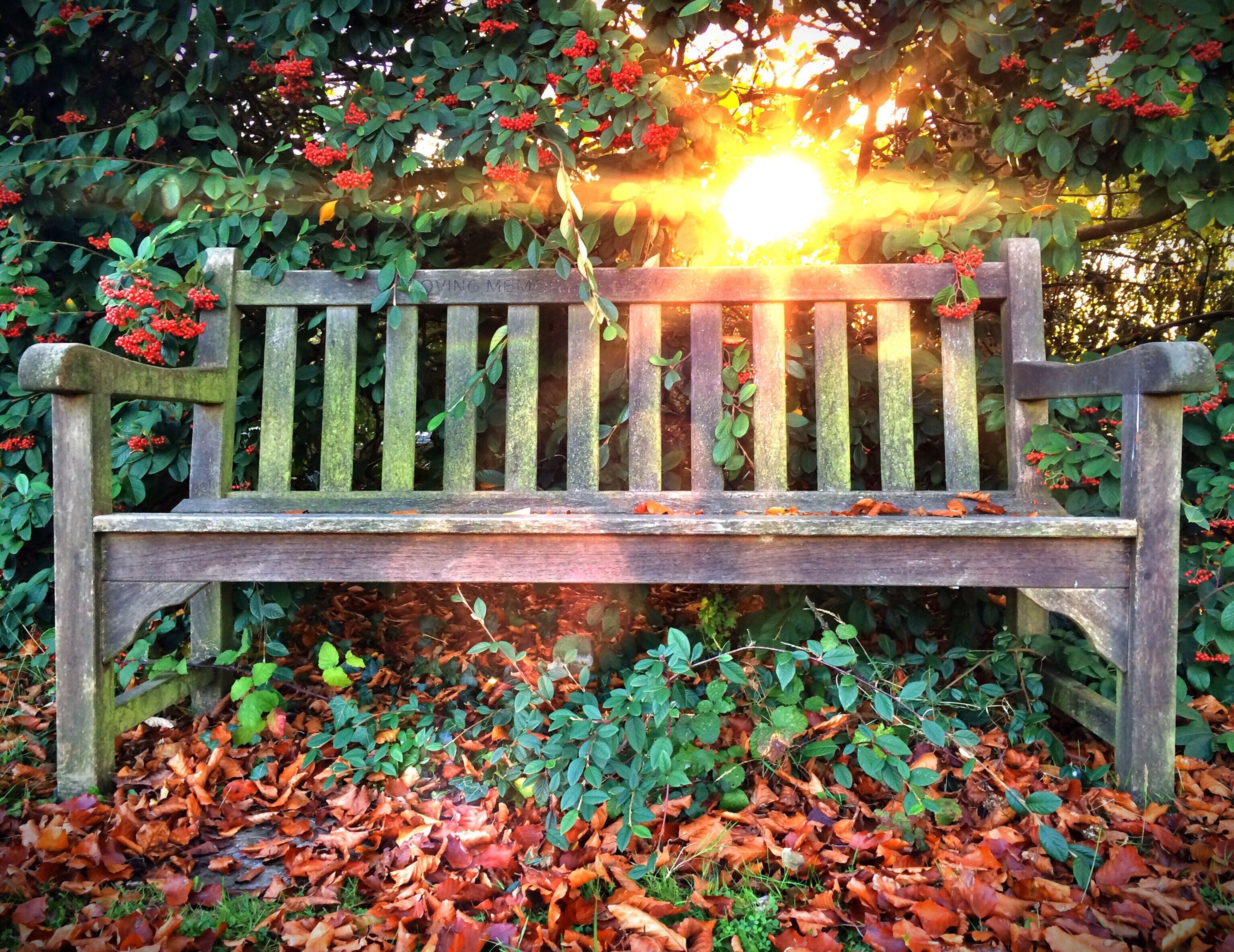 fence, leaf, sunlight, park - man made space, nature, autumn, plant, season, railing, wood - material, growth, tree, change, bench, tranquility, beauty in nature, outdoors, day, fallen, protection