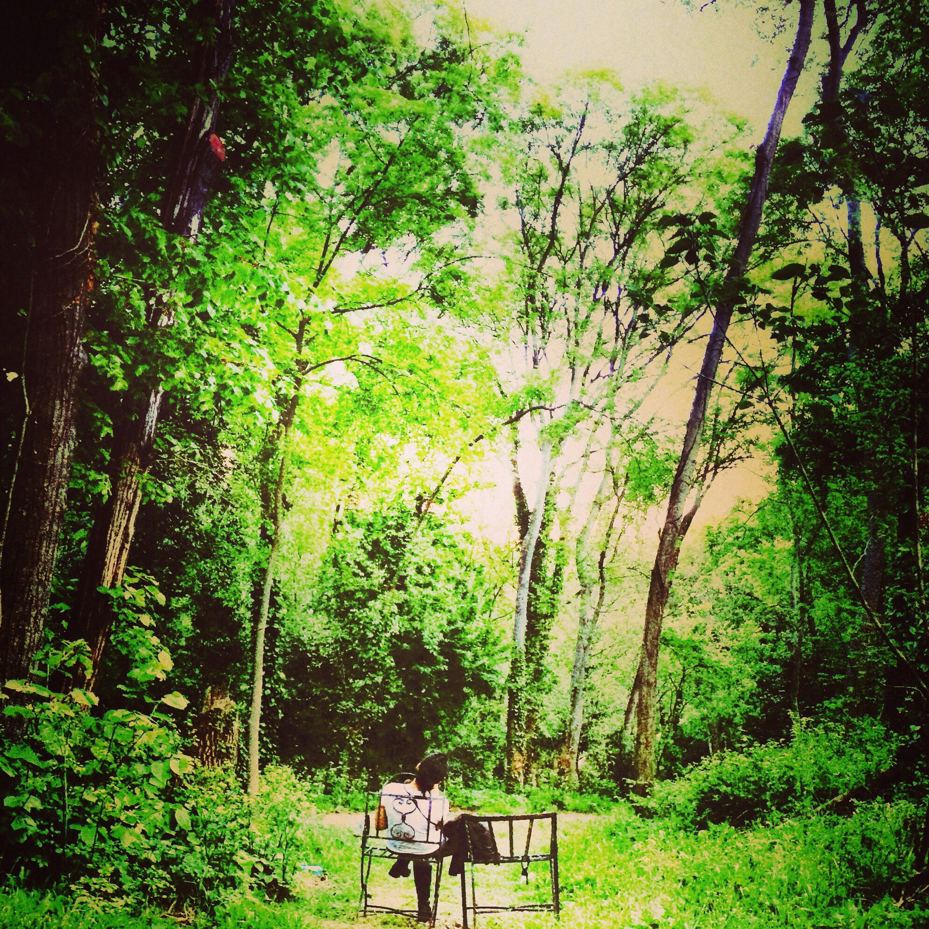 tree, growth, green color, tranquility, nature, tranquil scene, grass, plant, tree trunk, beauty in nature, forest, lush foliage, branch, scenics, landscape, sitting, park - man made space, bench, men