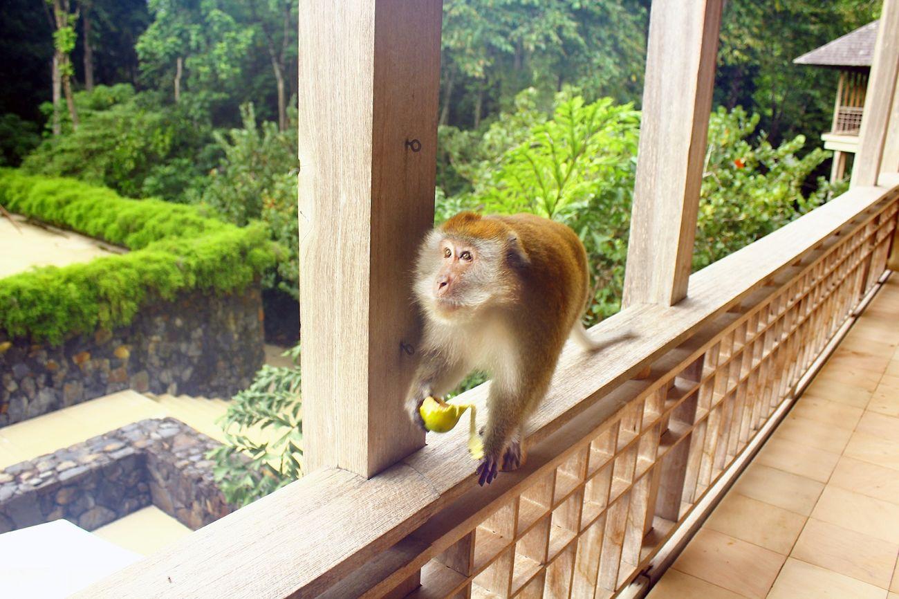 World wide Nature Animals Monkey in Bali.