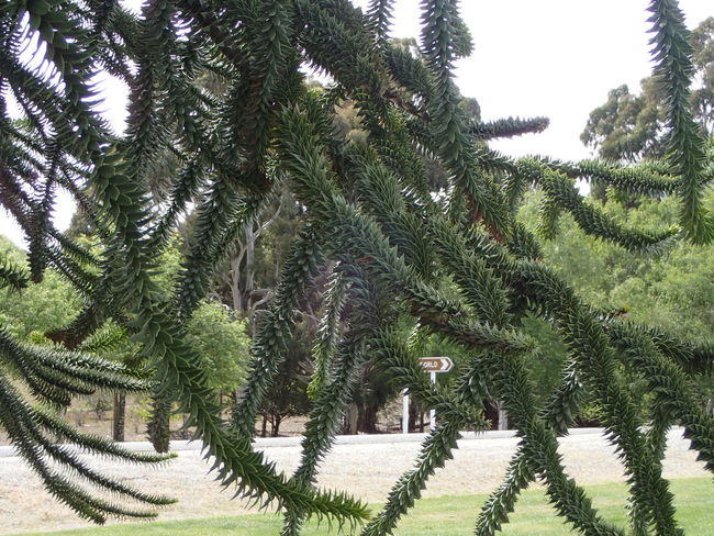 Patterns In Nature Beauty In Nature Green Color Growth Nature No People Plant Tree
