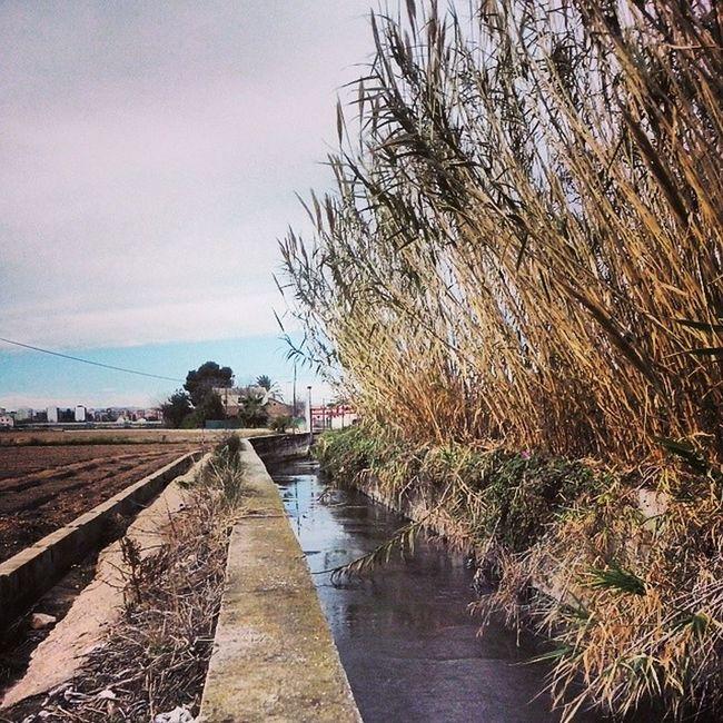 L'horta valencianaAcequia Irrigationditch Water Agua Valencia, Spain Valencia Landscapes Valencia Huerta València L'horta Sud