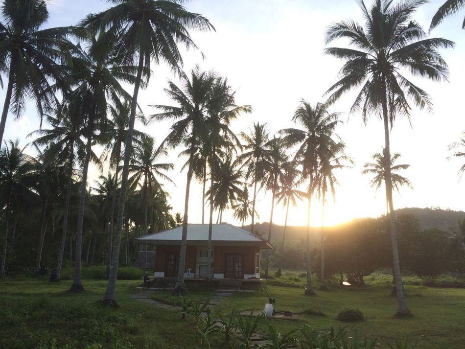 Sunrise over our room Sunrise Palm Tree Tree Nature Beauty In Nature Tranquility Scenics Cabin Philippines El Nido, Palawan
