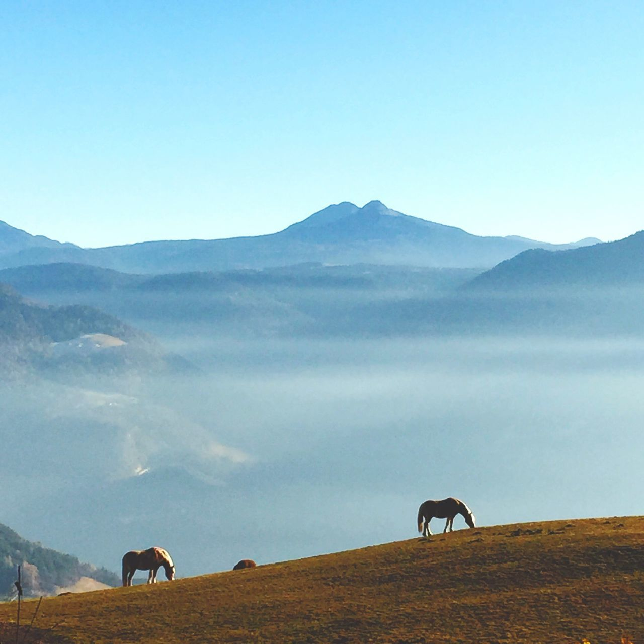 Beautiful stock photos of italy, Animal Themes, Day, Domestic Animals, Horse