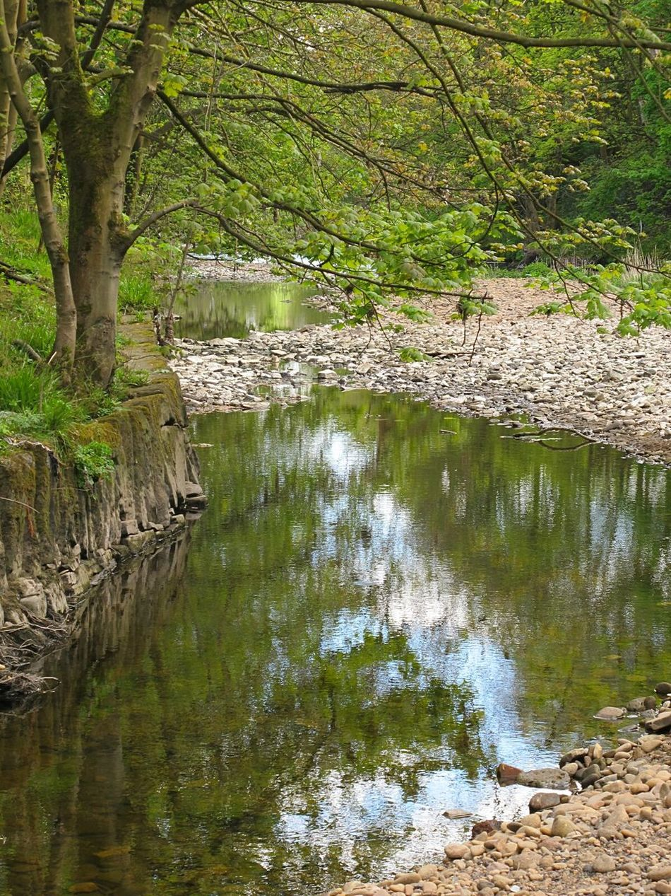 Water Nature Reflection Outdoors Beauty In Nature Tree Tranquility No People Tranquil Scene Day Lake Landscape Scenics Grass Forest Growth Springtime Beauty In Nature River Collection Tranquility Pebble Beach Green Color Reflection