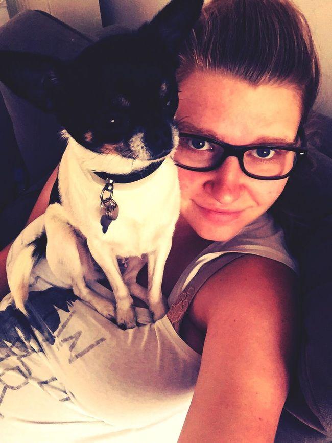 Dog Chihuahua Odette Cute♡ Tricolor Mybestfriend