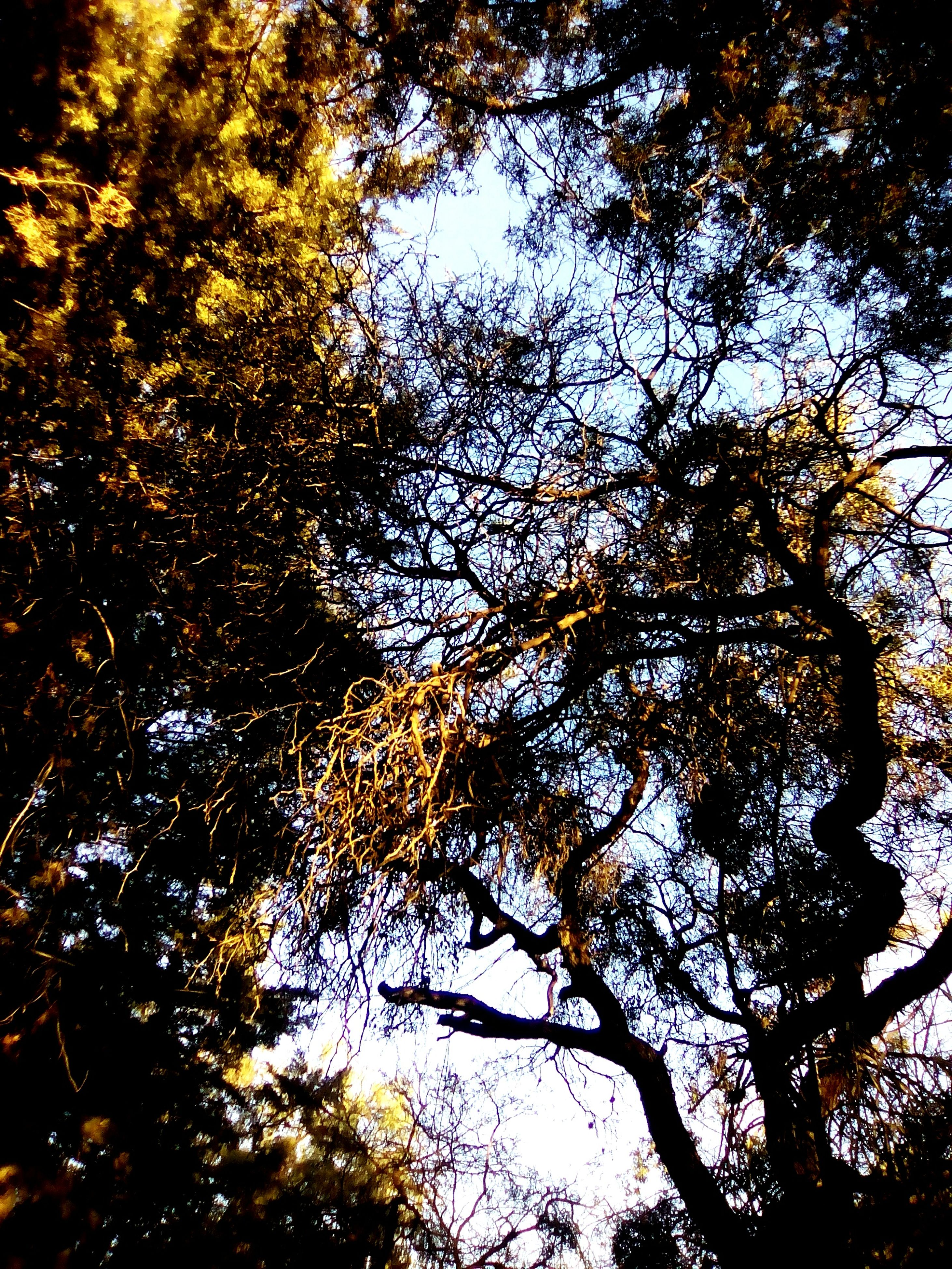 no people, tree, nature, sky, full frame, outdoors, backgrounds, beauty in nature, low angle view, branch, close-up, night