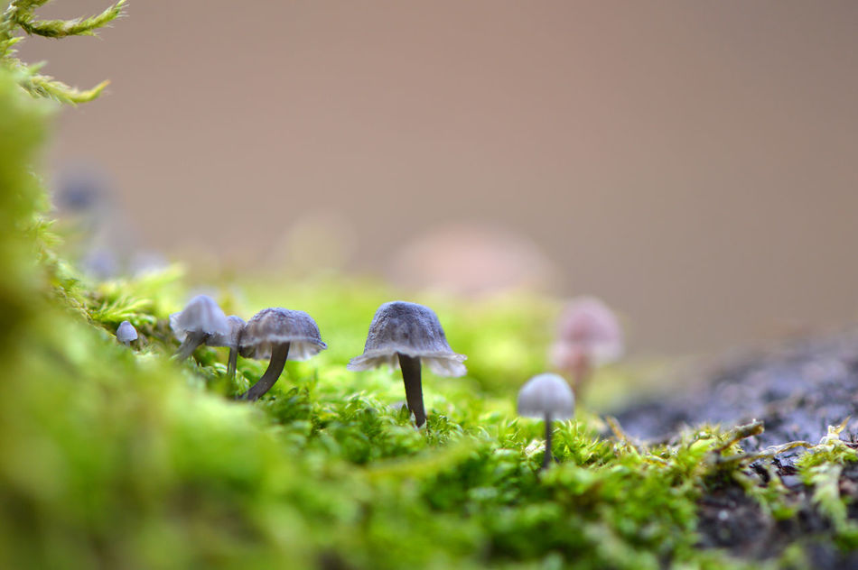 Nature Outdoors Close-up No People Day Moss Branch Tree Mushrooms Mushrooms 🍄🍄 Macro Fine Art Photography Detail Part Of Growth Green Color Macro_collection Nature_collection Natural Pattern Freshness Fragility Microcosm Bokeh Autumn In A Row