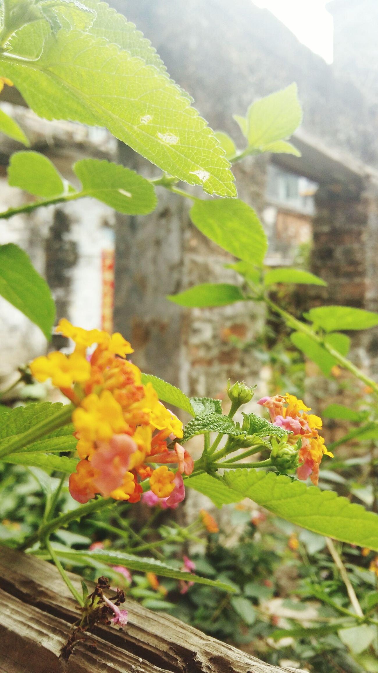 Leaf Plant Flower Nature Growth Beauty In Nature Day Green Color Freshness Fragility Flower Head Colorful Detail Close-up Old Buildings Focus - Zhuhai China