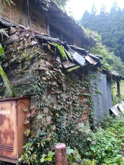 Nature House Ivy Covered Wall Ivy Leaves Building Exterior Walking Around Freshness Japan Photography Ishikawa Prefecture Beauty In Nature Plant Forest Ivy Green Ivy Wall No People Autumn 飛沫 Landscape Ishikawa, Japan Japan Lovers Outdoors Japan Photos 🇯🇵 Japan Day Built Structure