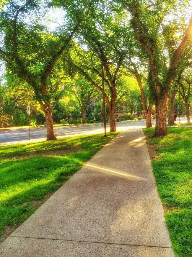 Urban Geometry Cityscape Walking Around Eye4nature Tree