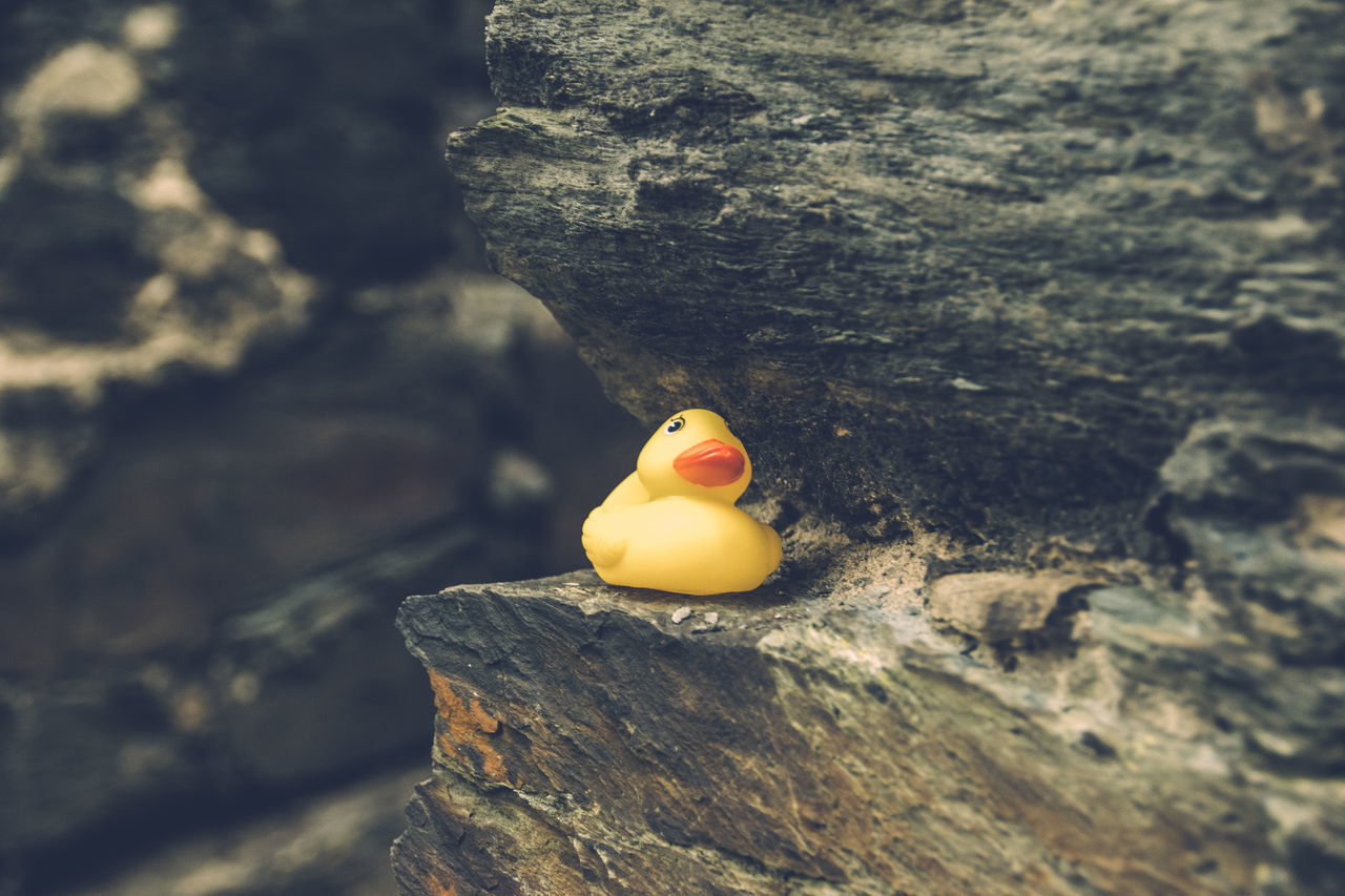 My rubber ducky follows me everywhere. :-D Animal Themes Animals In The Wild Bath Time Bathduck Bathtub Bird Day Focus On Foreground Fun Ledge Mountain Nature One Animal Orange Color Outdoors Quietscheentchen Quietscheente Rock Rubber Duck Schiste Selective Focus Shale Slate Squeaky Duck Yellow