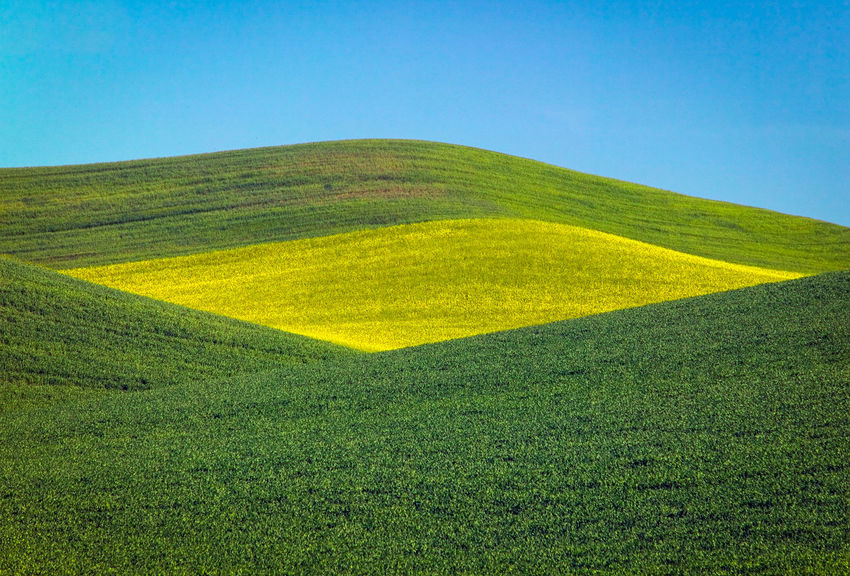 Garbanzo beans (dark green) and canola or rapeseed field Abstract Beauty In Nature Blue Canola Clear Sky Day Field Garbanzo Grass Green Color Growth Landscape Nature No People Outdoors Palouse  Rapeseed Scenics Sky Tranquil Scene Tranquility Washington State