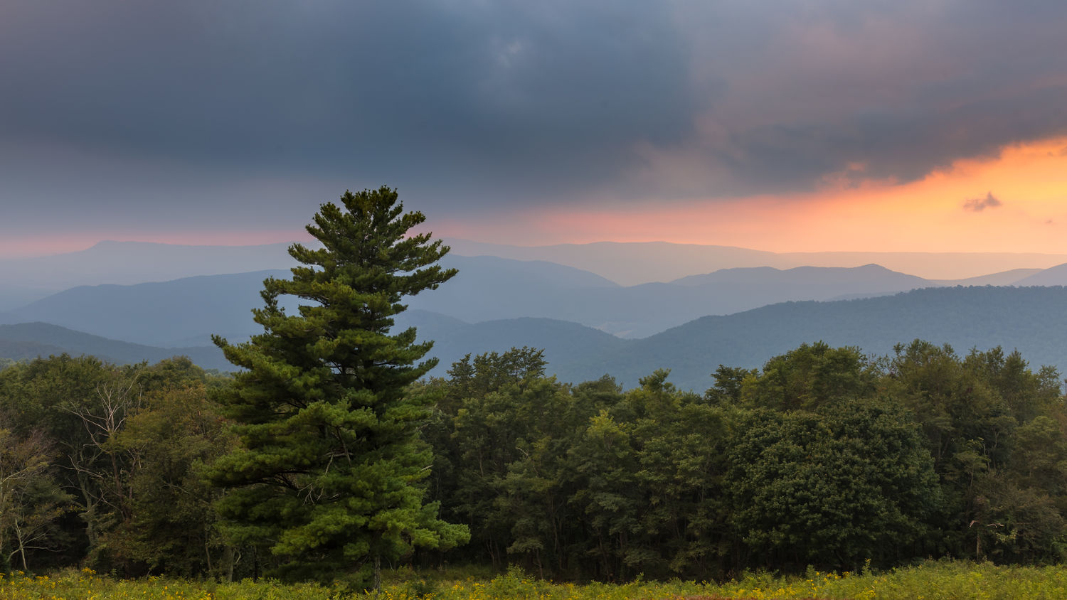 Cloudy sunset from Hazeltop Ridge in Shenandoah National Park Environmental Conservation Forest Landscape Mountain Mountain Peak Mountain Range Nature No People Outdoors Park Pine Tree Shenandoah National Park Sky Sunset Tree Tree Area Treetop