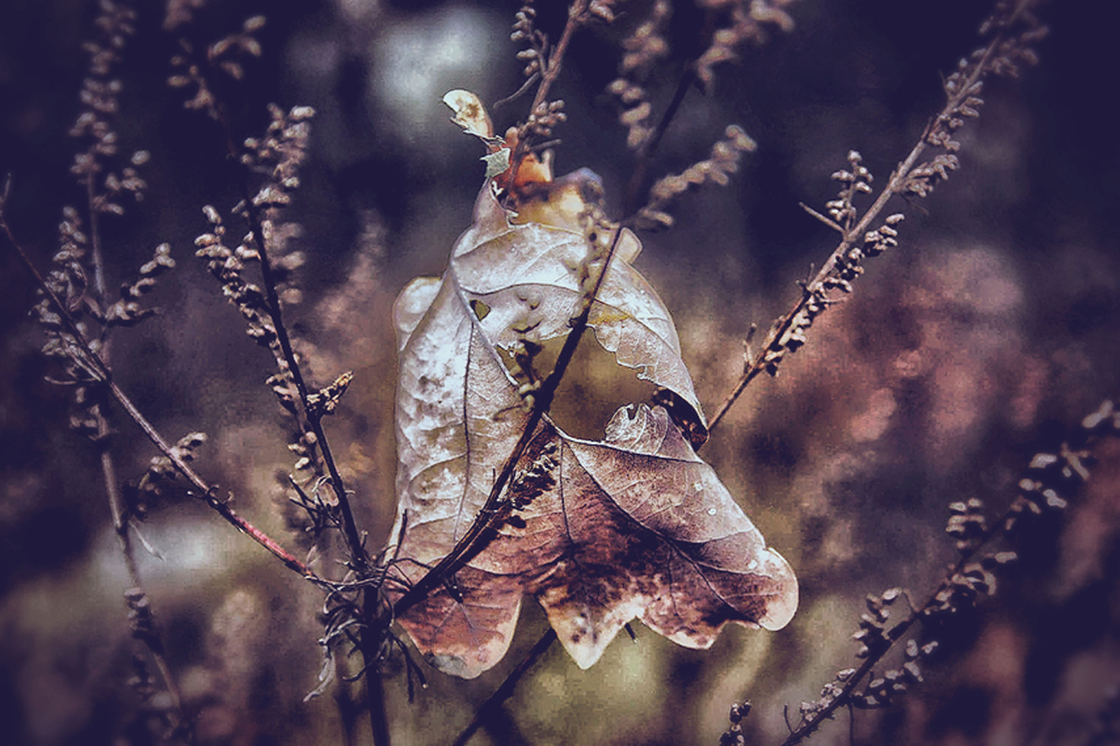 nature, one animal, focus on foreground, close-up, animal themes, insect, animals in the wild, no people, plant, outdoors, spider web, day, animal wildlife, beauty in nature, tree, spider, fragility, butterfly - insect, wilted plant, web