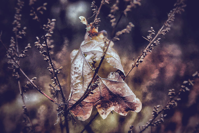 Nature Plant No People Beauty In Nature Getting Inspired Eye4photography  Getting Creative Autumn Leaves Autumn Nature Rainy Day Authentic Moments EyeEm Nature Lover Darkness And Beauty Autumncolors