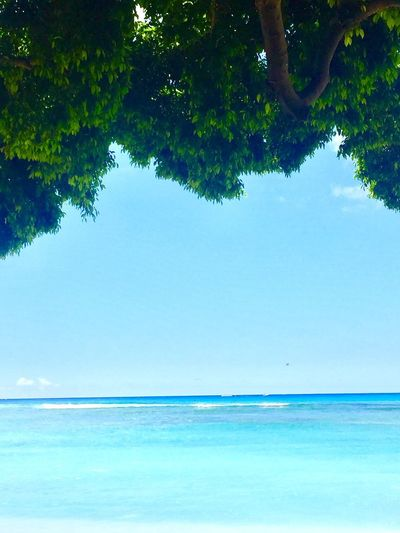Tree Water Sea Tranquility Tranquil Scene Beauty In Nature Scenics Nature Outdoors Day No People Horizon Over Water Blue Growth Sky Lost In The Landscape Second Acts Island Of Oahu, Hawaii Pacific Ocean View Oahu Oahu, Hawaii Perspectives On Nature Oahu / Hawaii An Eye For Travel