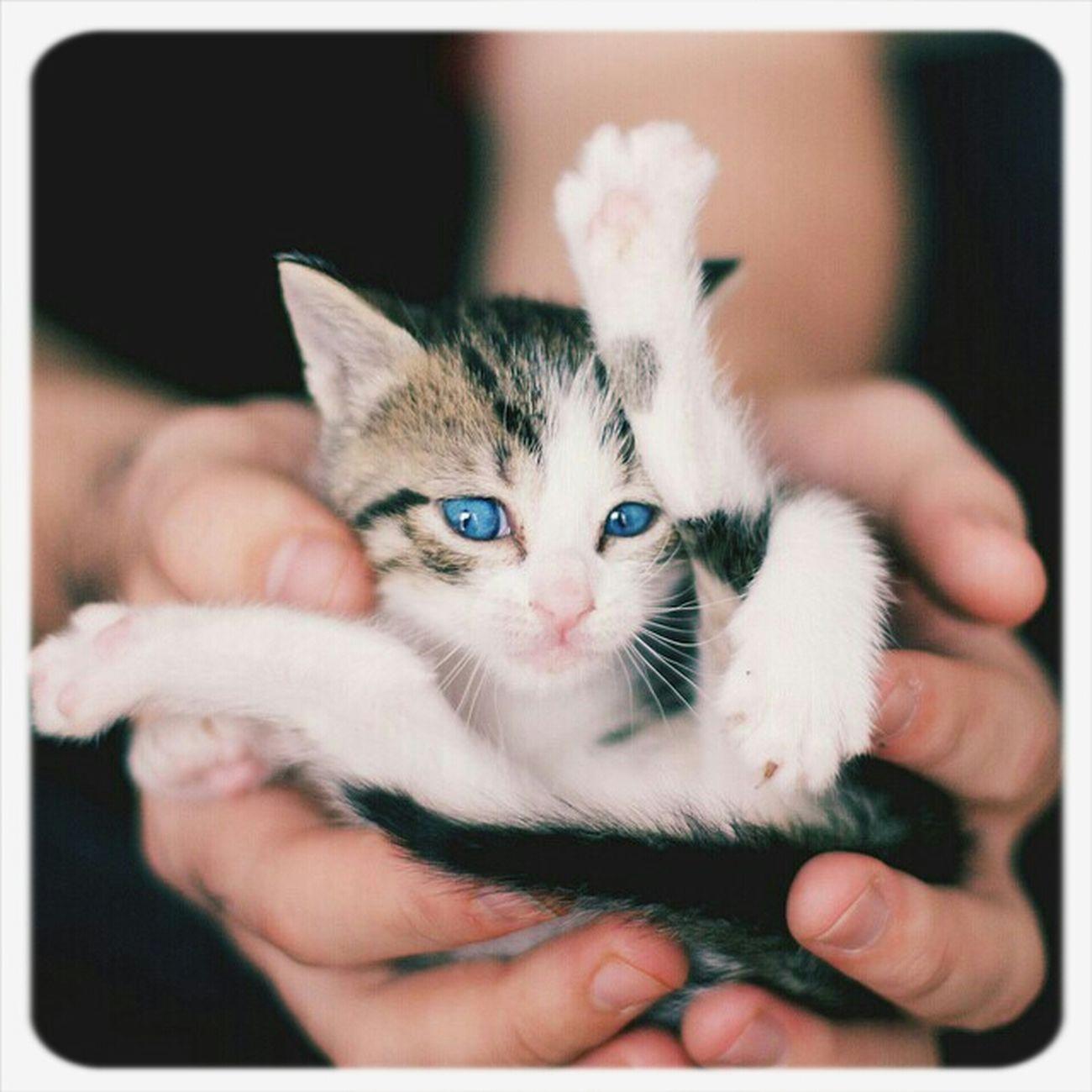 Cats Lindo Gatito