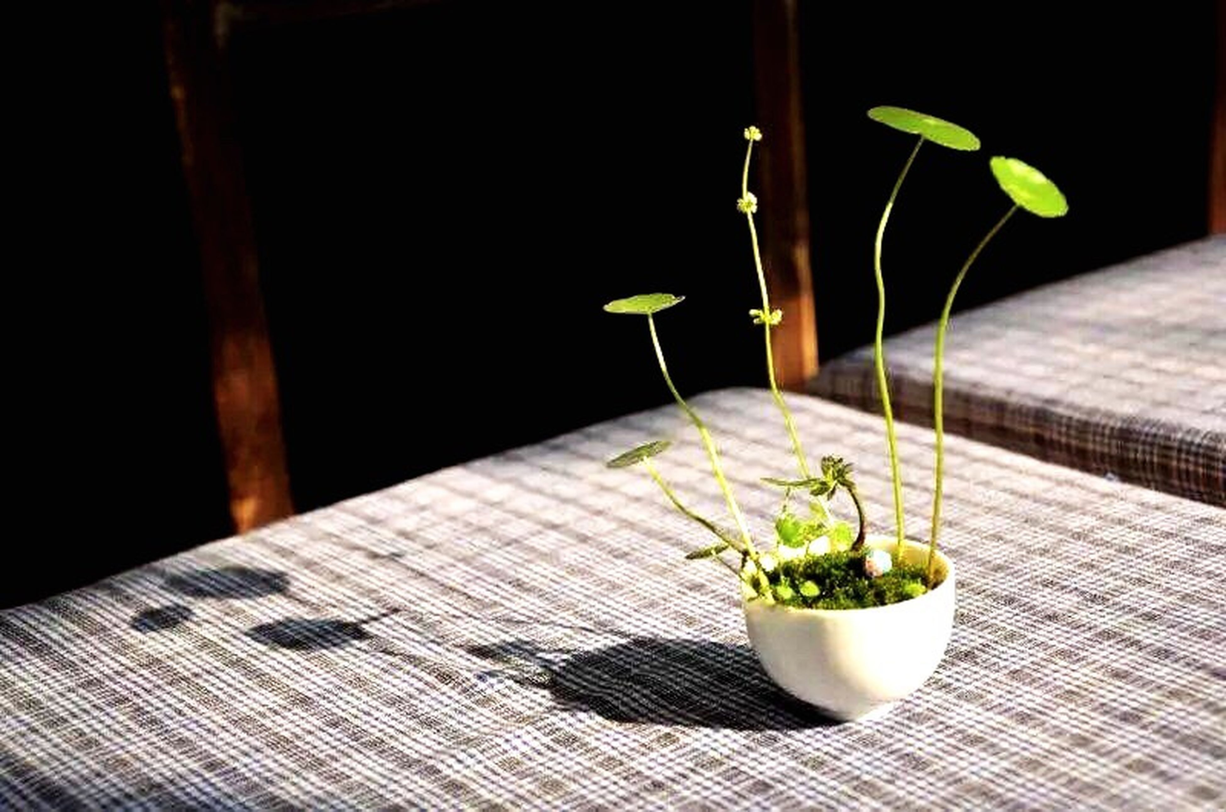 table, indoors, leaf, potted plant, green color, freshness, plant, growth, wood - material, close-up, food and drink, home interior, sunlight, shadow, still life, focus on foreground, no people, flooring, high angle view, wooden