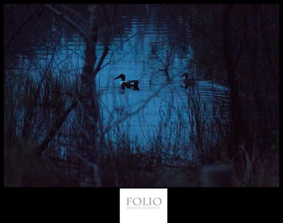 Ducks Mysterious Dark Natural Vignette Lovely EyeEm Best Shots EyeEm Nature Lover Check This Out