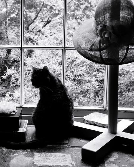Albert Schweitzer thought one could find refuge from the miseries of life with cats. Word. Cats Cat Cute Pets Silhouette EE_Daily: Black And White Monochrome Window Bird Watching Taking Time To See The Little Things Beautiful Animals