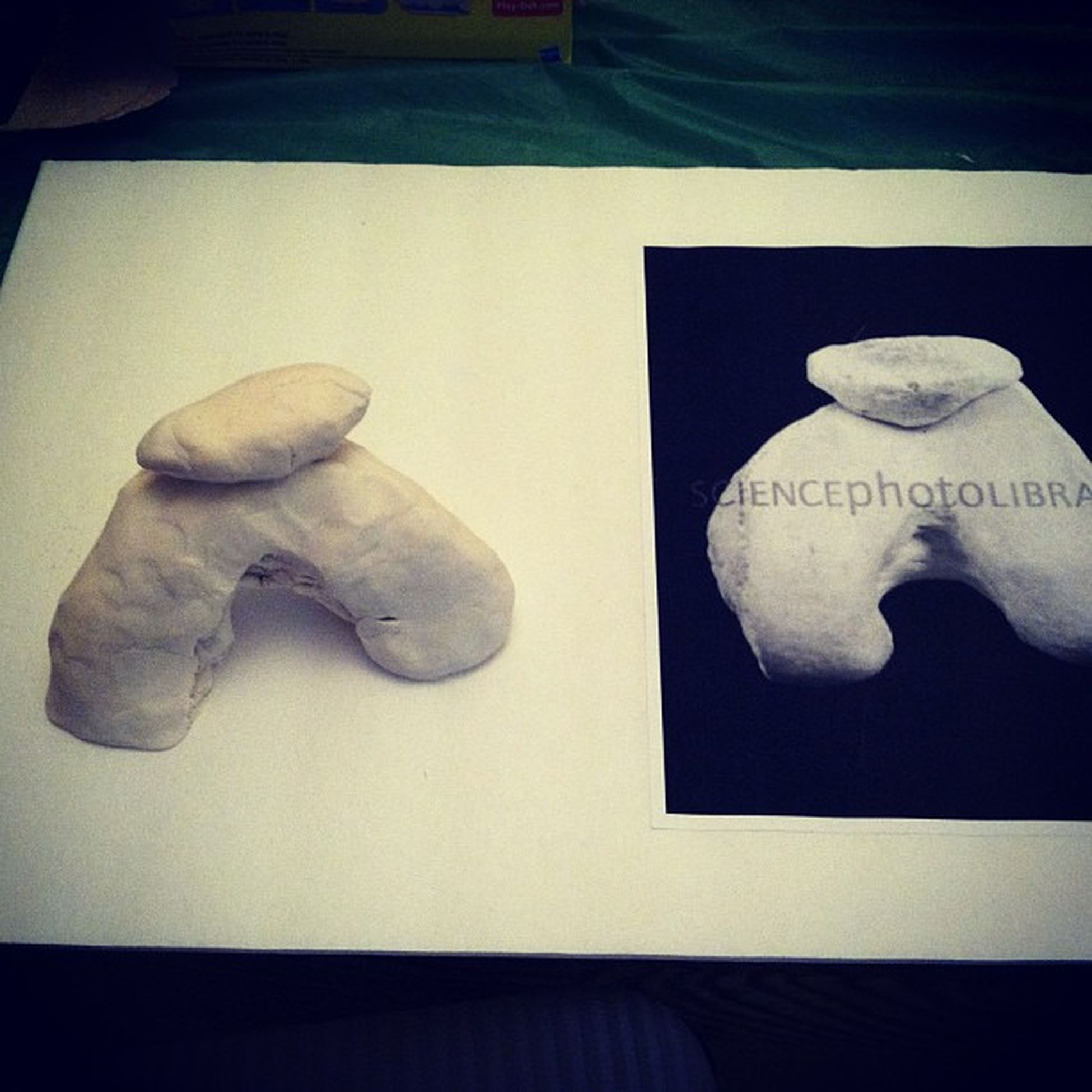 One of the manny projects I have to do for school. Schoolprojects Femur Patella
