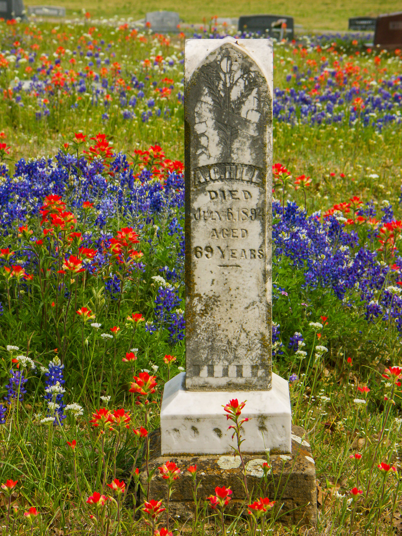 Texas graveyard in the spring with bluebonnets and indian paintbrush Cemetery Close-up Day Flower Grass Grave Graveyard Graveyard Beauty Multi Colored No People Outdoors Spring Springtime Text Wildflower Wildflowers