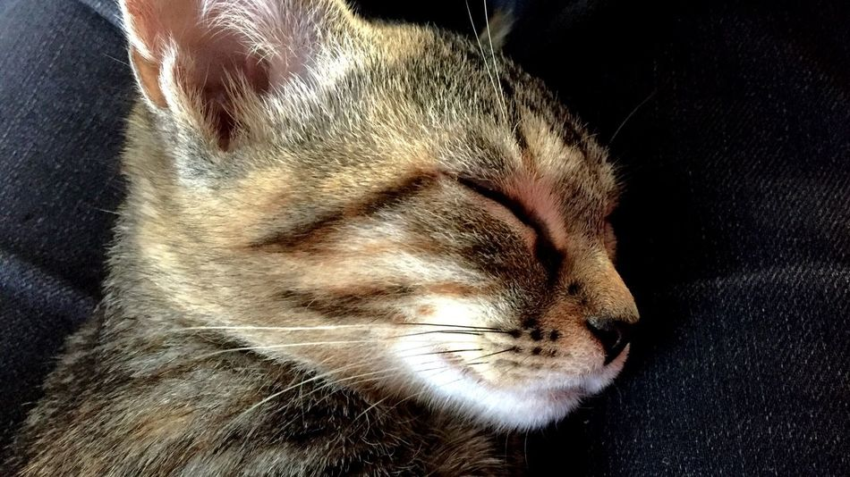 One Animal Pets Animal Themes Sleeping Domestic Animals Eyes Closed  Close-up Mammal Whisker Indoors  Relaxation Domestic Cat No People Day Cat First Eyeem Photo Followme Hello World
