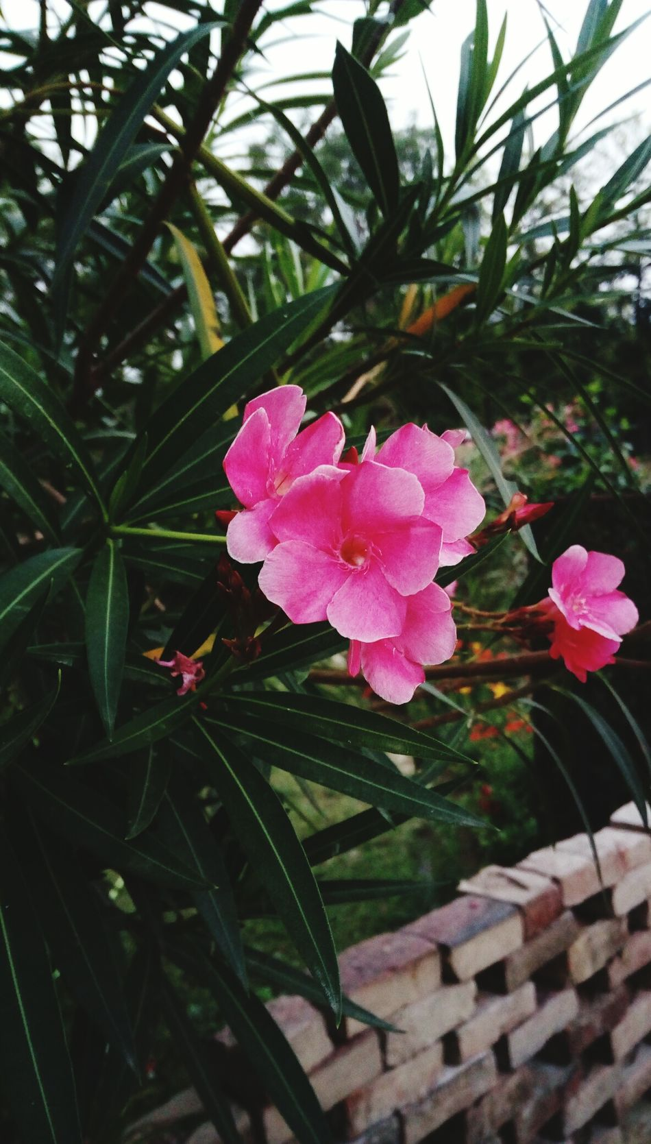 Growth Beauty In Nature Pink Color Leaf Petal Freshness Outdoors Flower Head Close-up Flower Plant Nature EyeEmNewHere Resist The Secret Spaces Long Goodbye EyeEm Diversity
