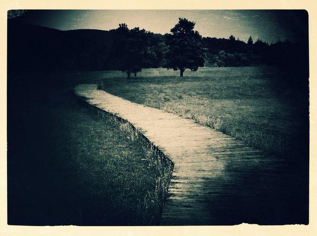 Path at Omaha Beach Path