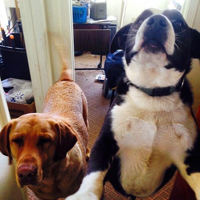 """""""May I help you?"""" -Clifford & Duke"""