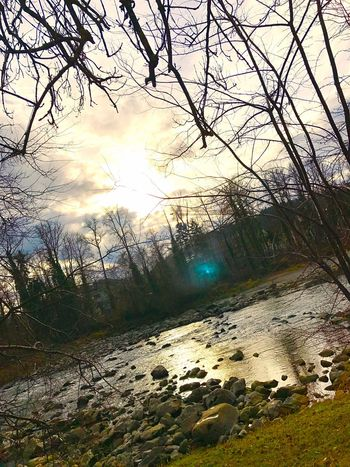 First Eyeem Photo Nature Nopeople Trees Sun Water Thurgau Thur