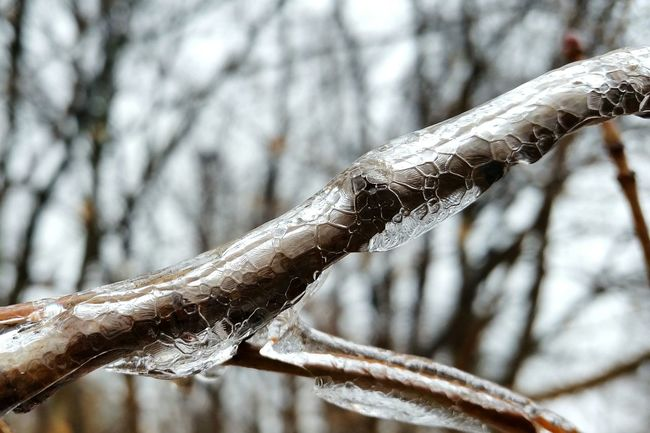 Winter Icepatterns Ice Nature Frozenbranch Frozen Icy Deepfreeze